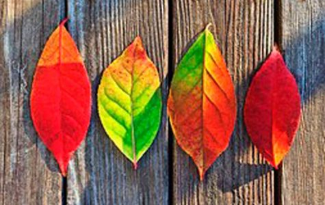 7 Things Worth Doing This Fall