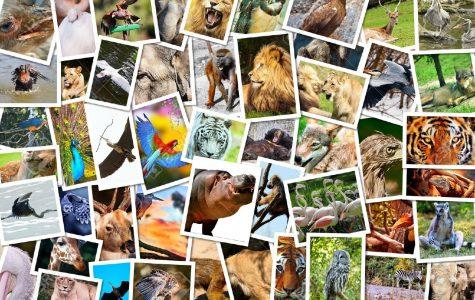 Spirit Animal Quiz!