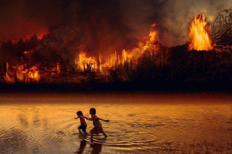 The+Amazon%27s+Burning+Future