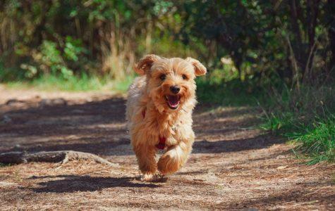 Dogs of Arapahoe